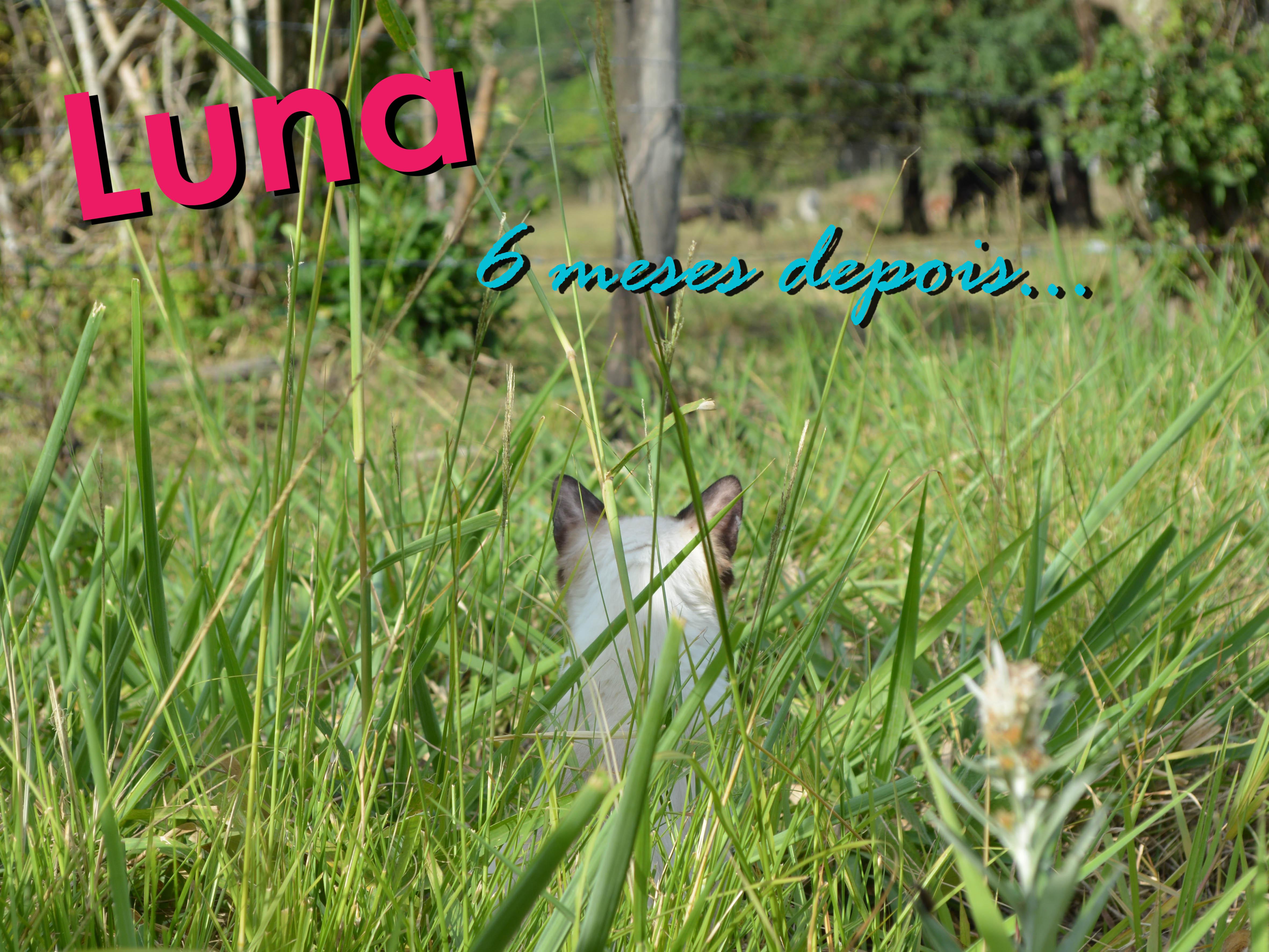 Luna – 6 meses depois..